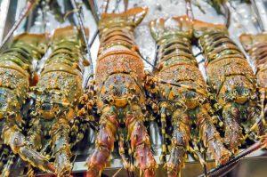 Frozen-Lobster